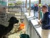 stepping-stones-adult-day-program-visits-burger-farm-newtown-ohio-fall-festival-03